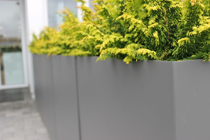 Pewter Dividers planted with Fern Spray