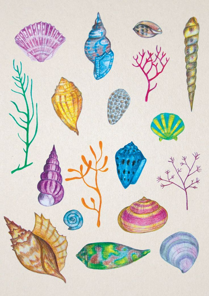 Shells, snails and corals illustration from water world.