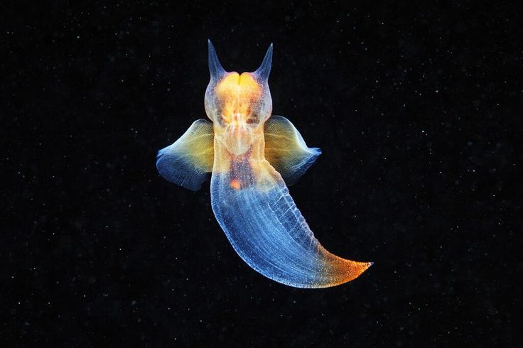 Twitter / SciencePorn: The Naked Sea Butterfly ...