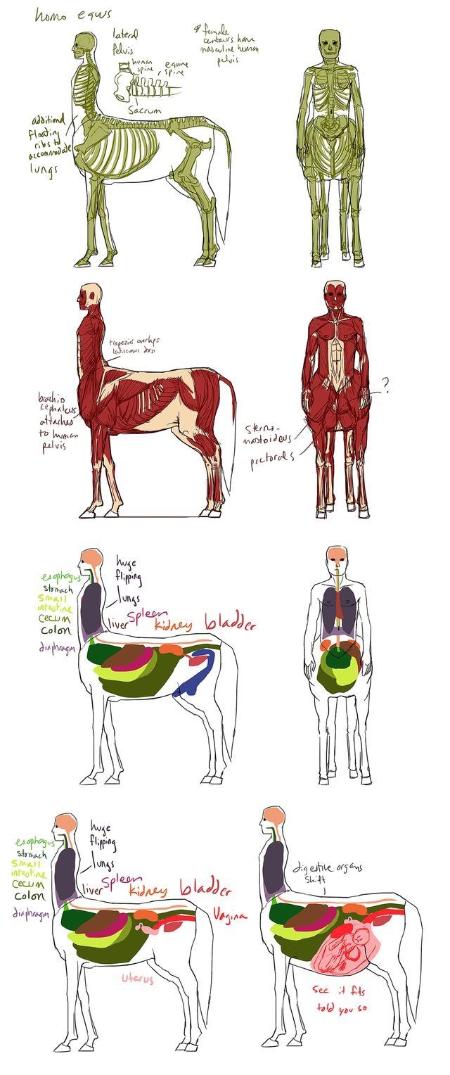 "Centar anatomy.  The ""see it fits, told you so"" craps me up."