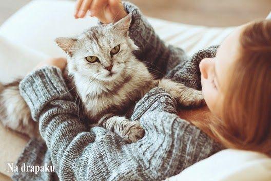Czy #koty potrafią zrozumieć, co do nich mówimy?