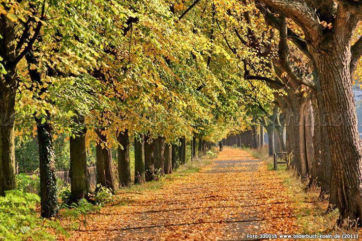 Linde (Baum) Herbst