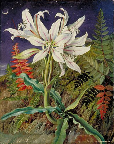 Kew: Marianne North Gallery: Painting 110: Night-Flowering Lily and Ferns, Jamaica