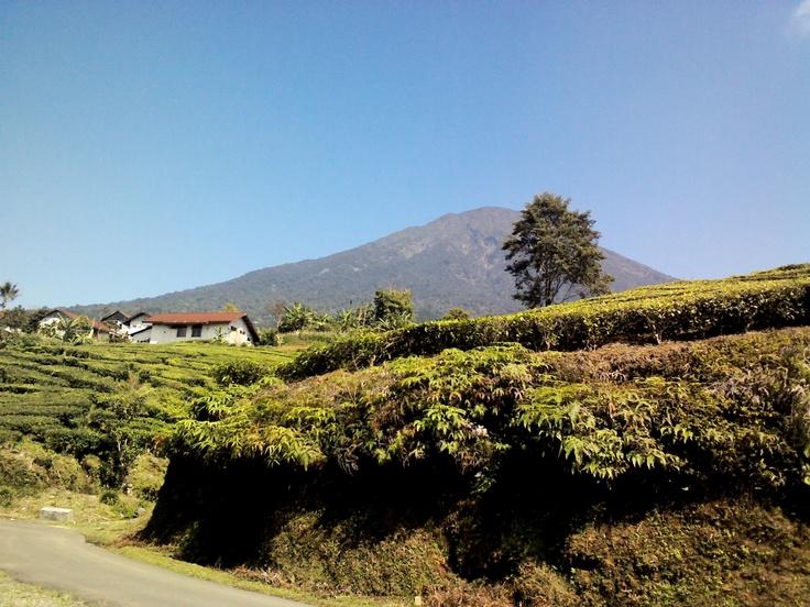 Home sweet home.. blue sky, mountain, and tea garden... - Pagaralam, Sumatera Selatan