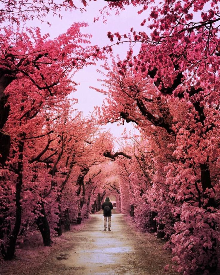 "126.6k Likes, 570 Comments - BEAUTIFUL DESTINATIONS (@beautifuldestinations) on Instagram: ""Getting lost in a pink wonderland 💕(📷: @sassychris1)"""
