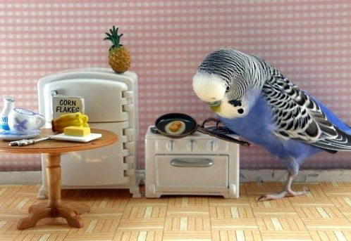 Budgie kitchen.                                                                                                                                                                                 More