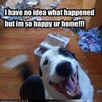 Happy Destructive Border Collie