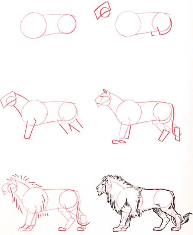 Learn to draw: Lion