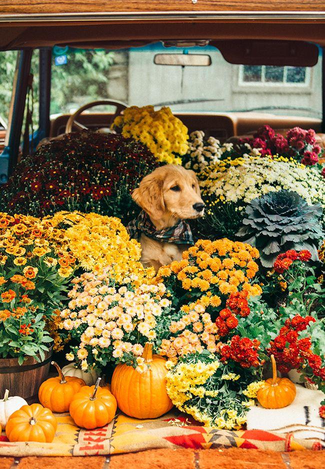 autumn mobile golden