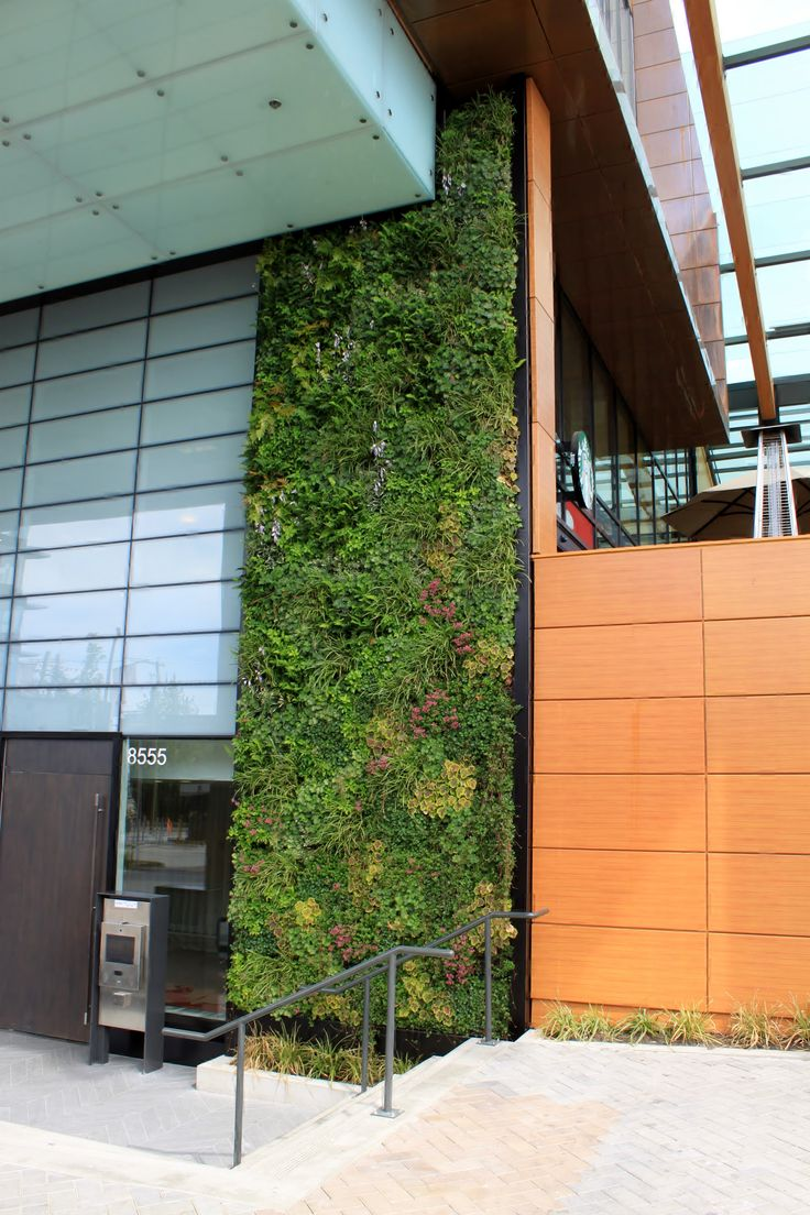 112 best the benefits of plants images on pinterest for Green wall advantages