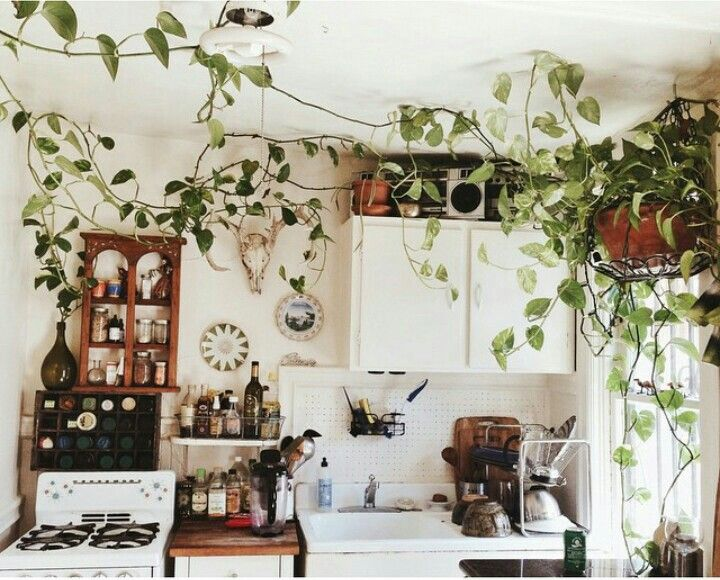 Those vines crawling through the kitchen!