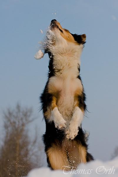 Winter, Schnee, Schneeball, Hund, Hunde