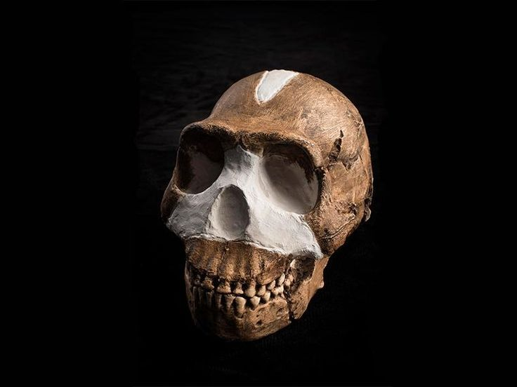 "academicatheism: "" What Makes a Fossil a Member of the Human Family Tree? The surprising new species Homo naledi raises more questions than answers—for now By Brian Handwerk Every family has its..."
