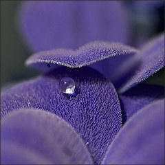 ..purple solitude...: Beautiful Flower, Inspiration Natural, Colour Purple, Fun Natural, Amazing Natural, Awesome Natural, Dew Drop, Color Purple, Natural Images