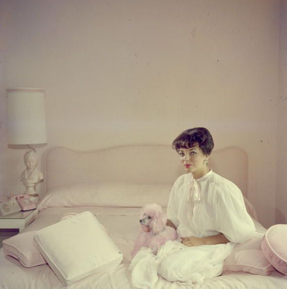 Circa 1955: Film star Joan Collins in a pink and white bedroom with an accessory pink poodle. (Photo by Slim Aarons/Getty Images)