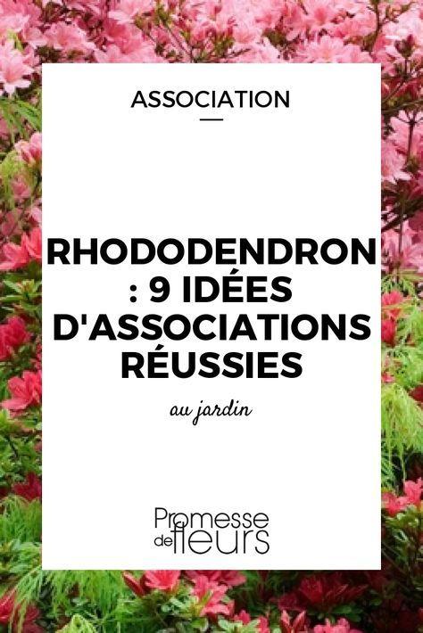 Découvrez nos 9 idées pour bien associer les rhododendrons au jardin, en massif semi-ombré ou en bac avec d\'autres plantes de terre de bruyère.