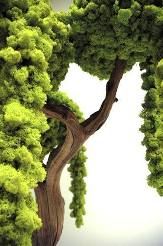 .amazing tree!