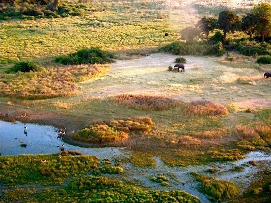 Helicopter Safaris over Botswana
