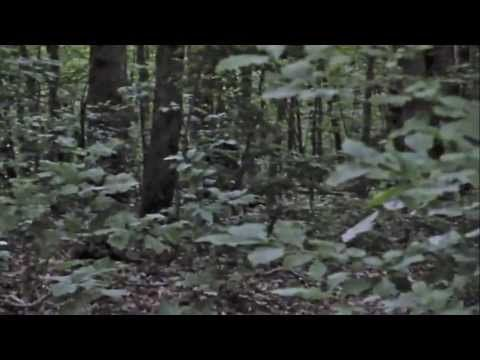 Bigfoot Sighting - Blueridge, GA - July 12th, 2013