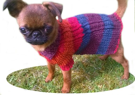XXS knit Dog Coat, Cable design, Extra Small dog clothing, Small Dog Clothes, Teacup clothing, Puppy Clothes, Puppy Jumper, puppy sweater UK