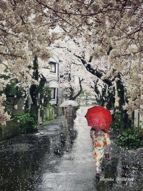 Kyoto entre cerezos y lluvia, Japón me enamora