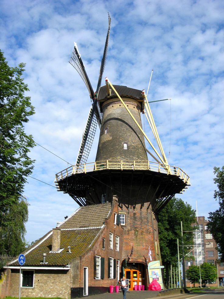 Molen de Roos, aan de Phoenixstraat in Delft, Nederland. Het gebouw op de achtergrond heette vroeger de Gistfabriek en later Gist- Brocades.