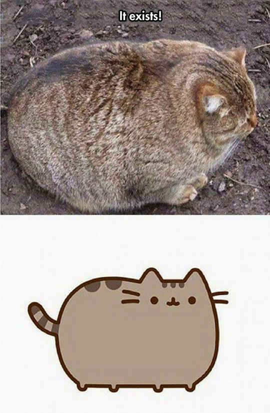 The Real Pusheen // tags: funny pictures - funny photos - funny images - funny pics - funny quotes - #lol #humor #funnypictures
