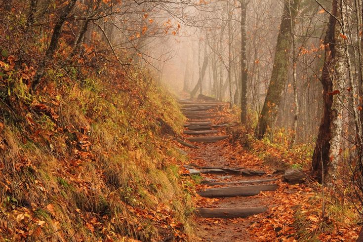 5 Things You Didn't Know About the Smoky Mountains Appalachian Trail