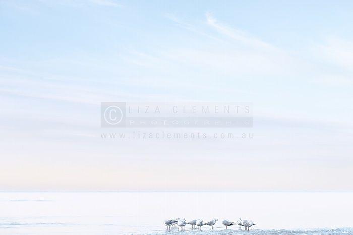Seagulls at Beaumaris Beach, coastal, photography, wall art, seascape