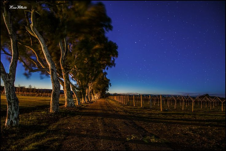 Swan Valley, Perth just before sunrise