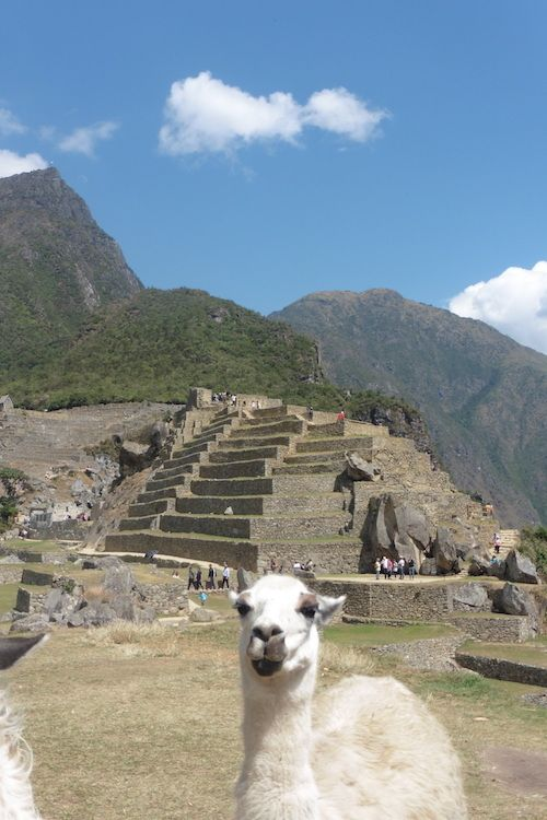 Le Machu Picchu est une ancienne cité Inca du XV ème siècle, particulièrement bien conservée, Elle n'aurait été révélée qu'en 1911, ce qui explique en partie qu'elle n'ait pas été complètement dépouillée de ses pierres comme beaucoup de sites Incas. Le...