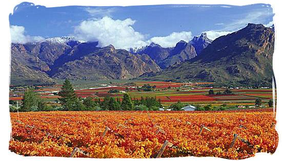 Vineyards between rugged mountains in the Western Cape province - Provinces of South Africa