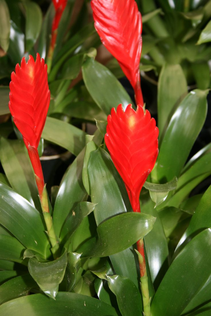 Find This Pin And More On Tropical Plants By Mygardenanswers