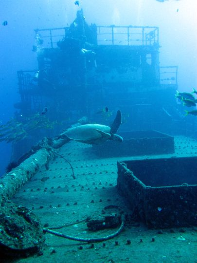 Wreck diving in Oahu. This would be cool to scuba dive too, but not sure if I am brave enough.