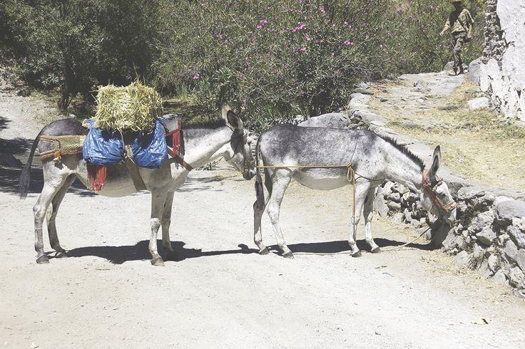 ¿Te gustan más los burros o yo?