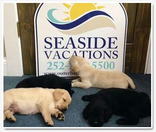pet-friendly-outer-banks-rental-homes