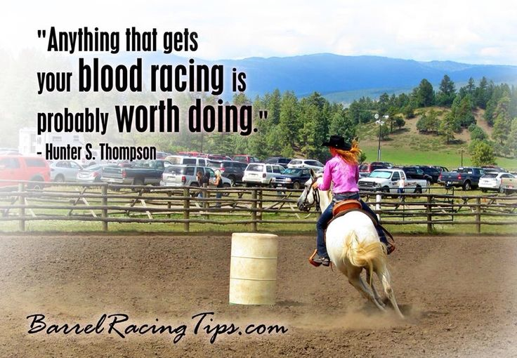 87 Best Images About Horse Quotes On Pinterest