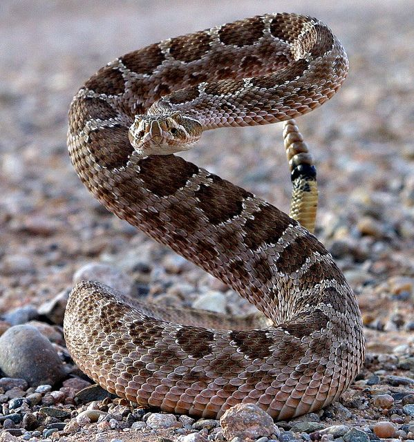 Most snakes take off when they sense humans nearby, not these guys, they're like..What do you want?! Come closer, I have something for you!