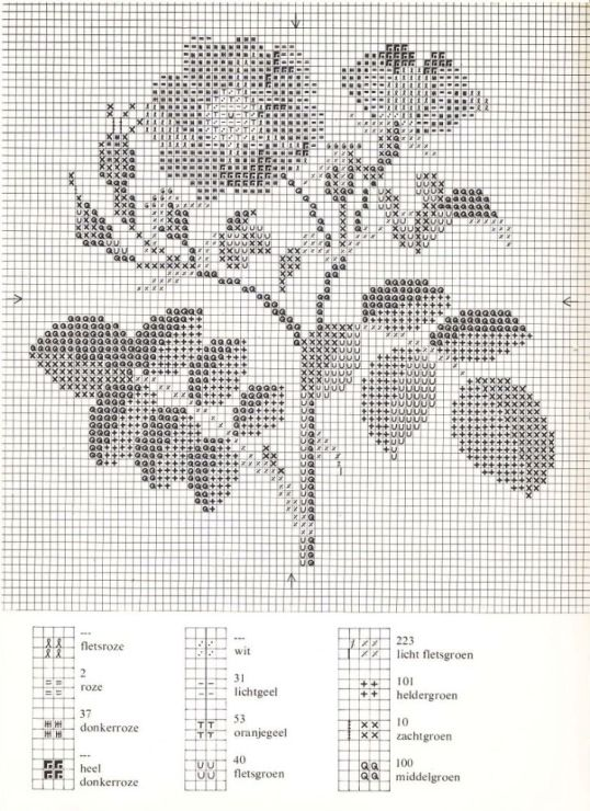 rosa eglanteria hybrida 2