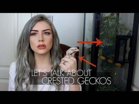 LET'S TALK ABOUT CRESTED GECKOS (Care Guide) - YouTube