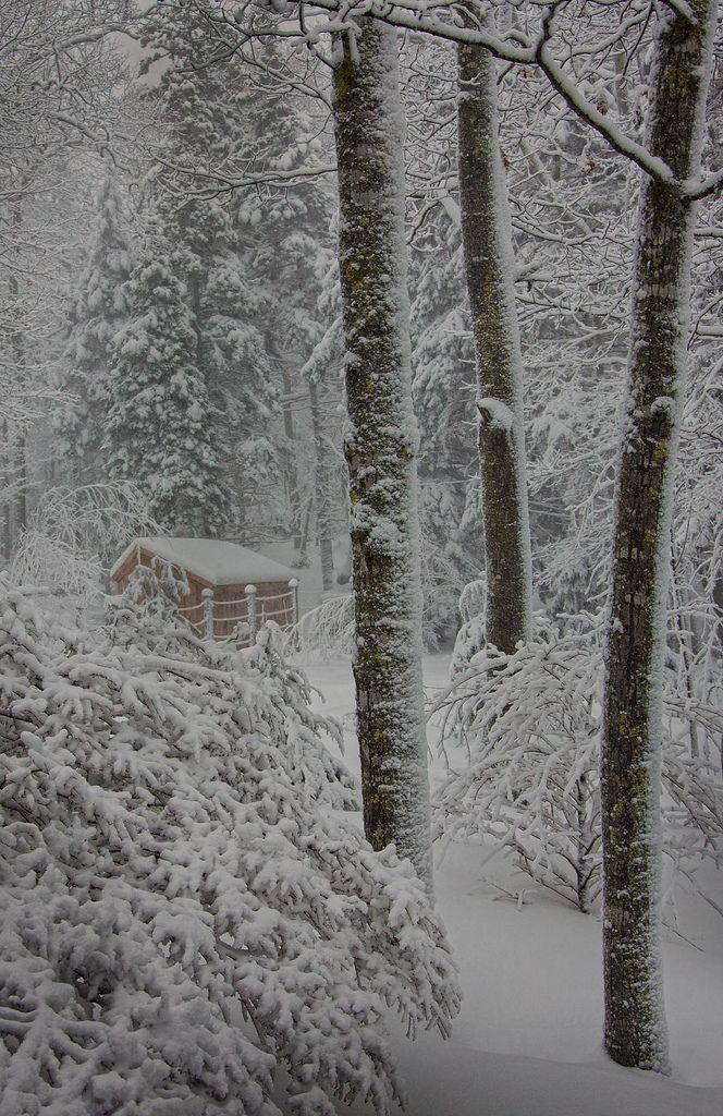 Snow covered cabin in the woods Classic Blizzard *** D'ArcyG