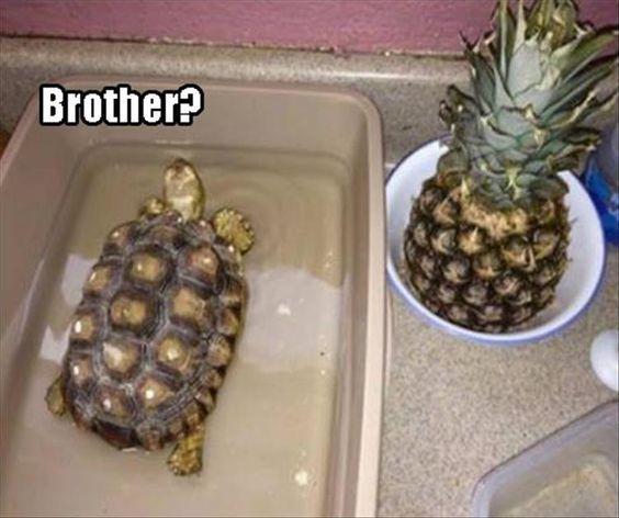 15 Hilarious Turtle Memes