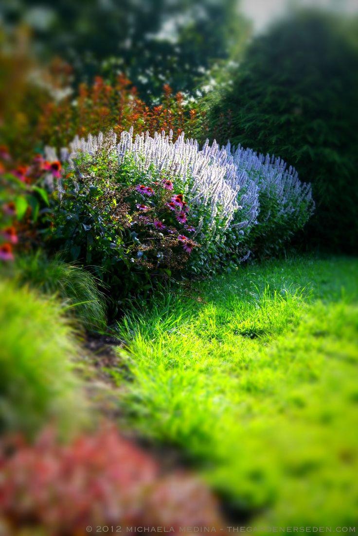Garden Design New England 10 best shaded front garden images on pinterest | garden ideas