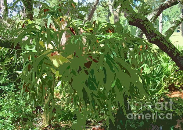 Staghorn Cutout photograph by Nancy L. Marshall - Staghorn Cutout Fine Art Prints and Posters for Sale #FineArtAmerica  Special effect applied to a photo of a staghorn fern.