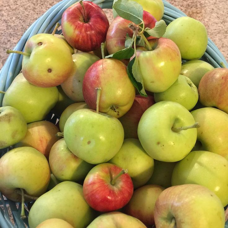 Simple Had to pick some of our apples before the worms and wasps ate them all