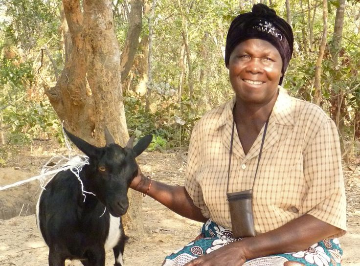 Goat - From TEAR's Useful Gifts: The original way to buy a goat and other poverty-fighting gifts. #usefulgifts #charity #donate #aid #food-and-livelihoods @tearaustralia