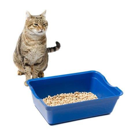 Verstopfung bei der Katze - Was tun? - http://www.katzenklo-kaufen.de/verstopfung-bei-der-katze-was-tun/