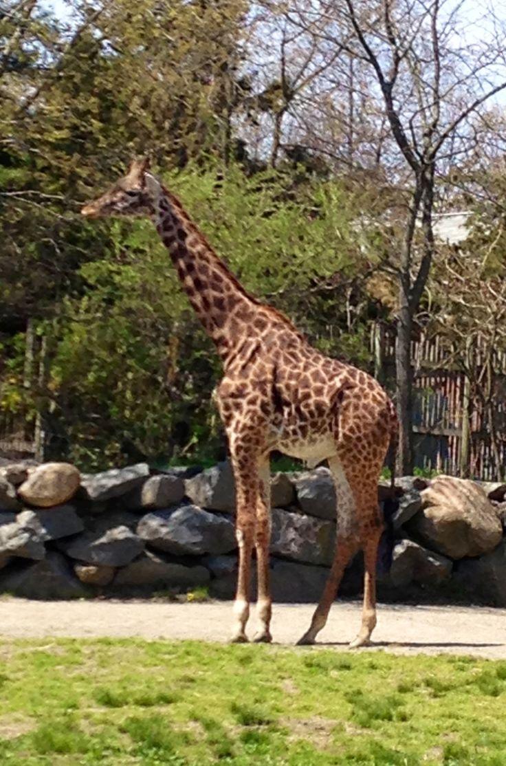 Oregon Zoo Camp