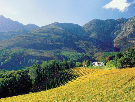 southafrica_winelands_maini.jpg (570×432)