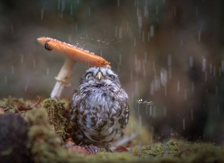 The 100 best photographs ever taken without photoshop My neighbor Totoro photo.Tanja Brandt